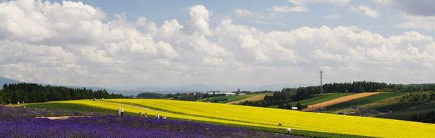 ทัวร์ญี่ปุ่น ฮอกไกโด ซัปโปโร โทยะ ชมทุ่งลาเวนเดอร์และฟาร์มชิกิไซโนะโอกะ