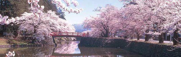 ทัวร์ญี่ปุ่น อิซาว่า อุทยานแห่งชาติฮาโกเน่ ล่องเรือโจรสลัด เทศกาลดอกซากุระ ไร่สตรอเบอร์รี่ อิสระเต็มวัน